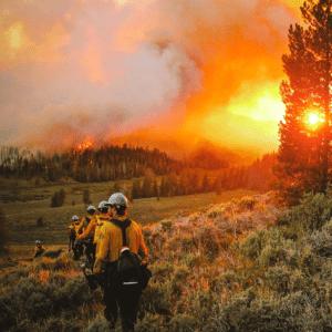 Woodland Wildfire